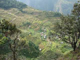 Terraces on the Langtang trek