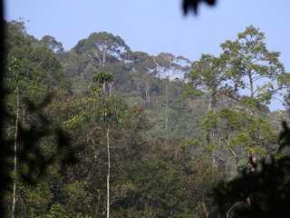 A forested ridge at Sinharaja NP