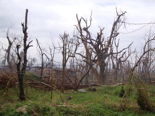 roadside woodlot on