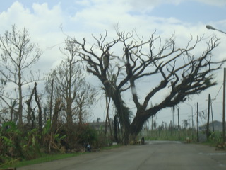 trees on Leyte left leafless