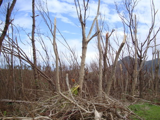 destroyed woodlot Leyte